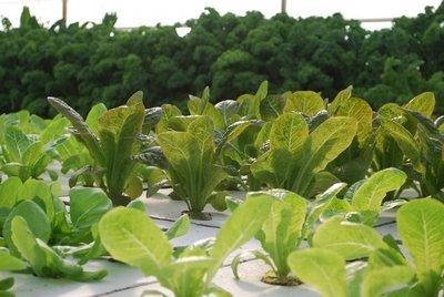 インディアナ州の医療用ワイヤー製造企業が商業アクアポニックス農場「Get Fresh Farms」を設立。年内のUSDAオーガニック認証の取得を目指す