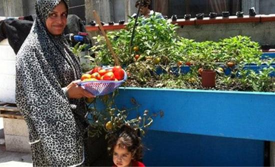 FAOがパレスチナ・ガザ地区でのアクアポニックス施設の設置をサポート。食料不足問題の改善へ