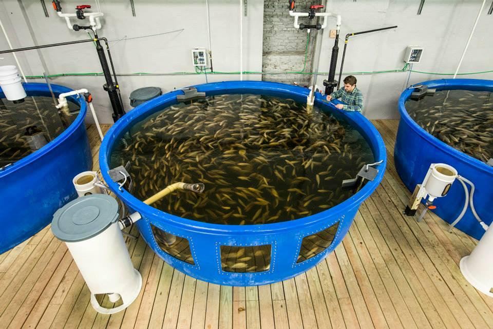 魚の大型タンク - Photo credit: Urban Organics
