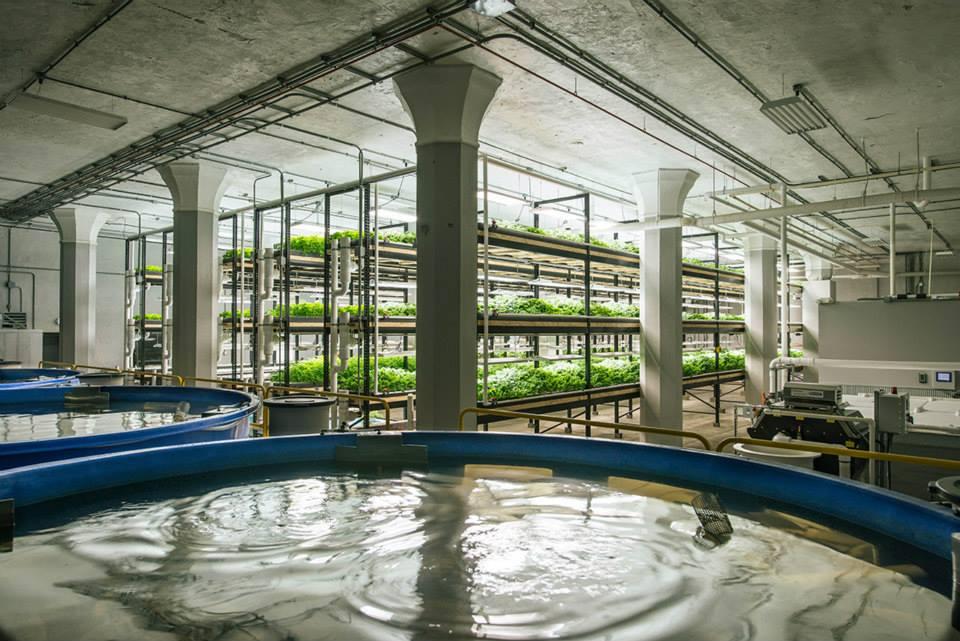 アメリカにある大規模なアクアポニックス施設 - Photo credit: Urban Organics