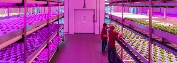 イギリス初となる商業規模のアクアポニックス農場が誕生。年間2万キロの野菜、4千キロの魚の生産を目指す