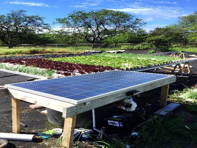 ハワイのアクアポニック農場のシステムはすべて手作り【僕の研修日記③】
