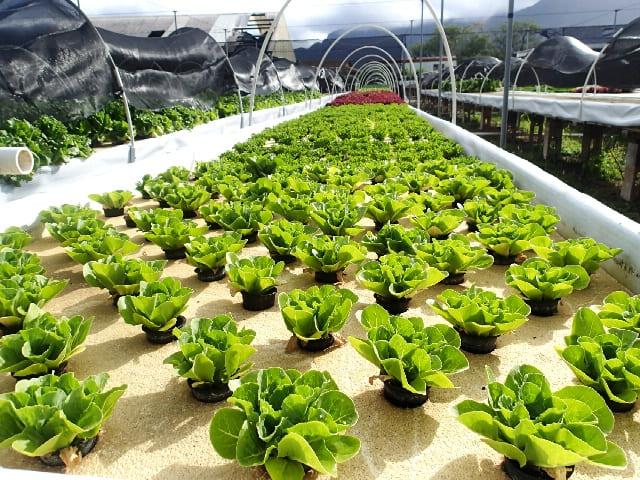 アクアポニックスで新規就農を目指して本場ハワイの農場へ【僕の研修日記①】