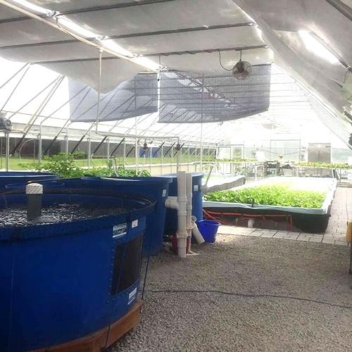 アクアポニックス農場訪問 (ケンタッキー州)-Bluegrass Aquaponics-